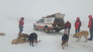150 sokak köpeği AKUT tarafından kurtarıldı
