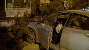 Alkollü sürücü çam ağacını devirdi