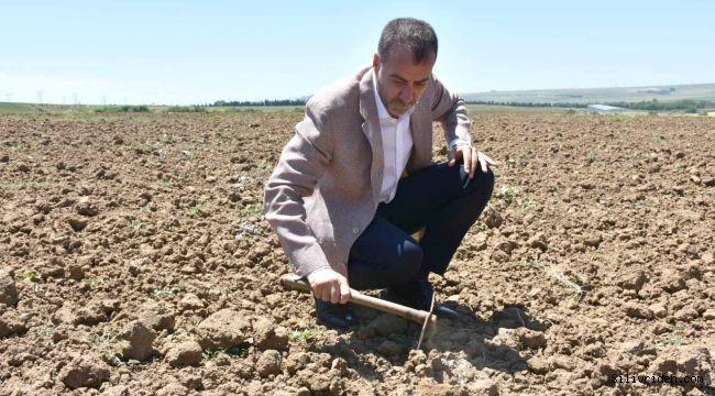 Başkan Yılmaz, Yerli Tohum Denemelerini İnceledi