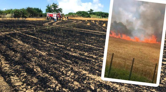 Silivri'de 6 dönümlük buğday tarlası kül oldu