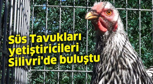Süs Tavukları yetiştiricileri Silivri'de buluştu