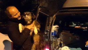 Silivri'de felç kalan köpek Ankara'ya gönderildi