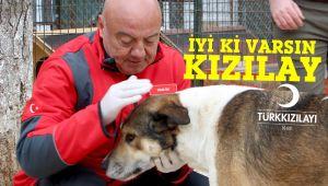 Kızılay'dan engelli hayvanlara bir kamyon yardım