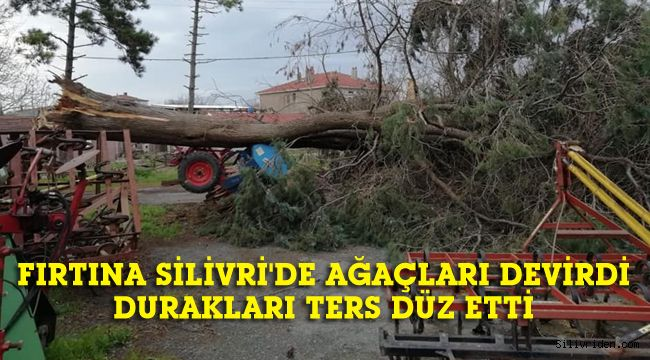 Şiddetli fırtına Silivri'de ağaçları devirdi