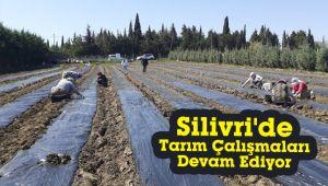 Silivri'de tarım çalışmaları devam ediyor