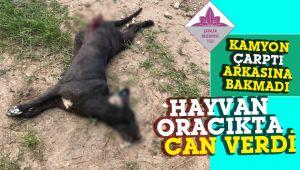 Çöp kamyonu sürücüsünün çarpıp kaçtığı köpek kurtarılamadı!