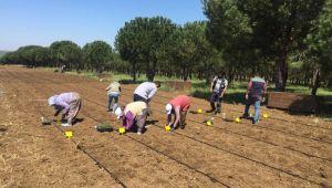 Silivri Belediyesinden çiftçiye destek sürüyor