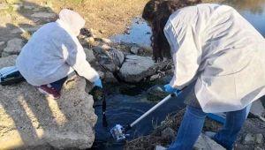 Silivri'de balık ölümlerinin yaşandığı dereden numune alındı