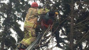 Elektrik akımına kapılan işçi ağaçta asılı kaldı