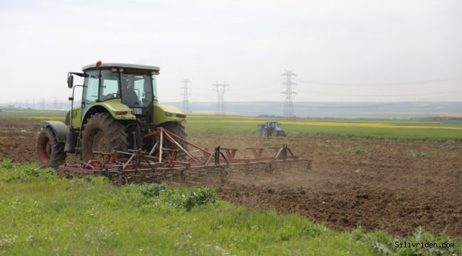 Silivri Belediyesi silajlık mısır ekti