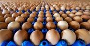 Avrupa'da yumurta krizi büyüyor
